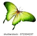 Stock photo color butterfly isolated on white 372334237