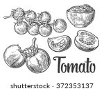 tomatoes. engraving vintage... | Shutterstock .eps vector #372353137