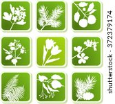 plant icons series | Shutterstock .eps vector #372379174