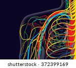 medical vector illustration of... | Shutterstock .eps vector #372399169