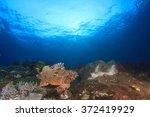 coral reef scorpionfish sea... | Shutterstock . vector #372419929