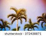 image of palm tree and blue sky   Shutterstock . vector #372438871