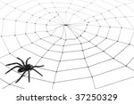 spider web for background use | Shutterstock . vector #37250329