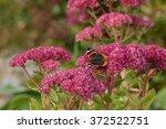 Butterfly On Flowers In...