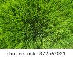 green grass texture photo taken ... | Shutterstock . vector #372562021