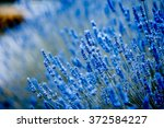 Stock photo blue flowers 372584227
