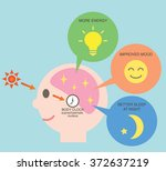 exposure to sunlight regulate...   Shutterstock .eps vector #372637219