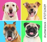 portraits of cute dogs on...   Shutterstock . vector #372712429