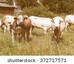pragelato  italy   circa july... | Shutterstock . vector #372717571