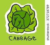 cabbage | Shutterstock . vector #372718789
