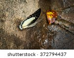 Small photo of beautiful butterfly in natural