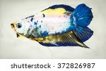 double tail fancy betta fish... | Shutterstock . vector #372826987