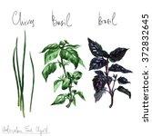 watercolor food clipart   herbs | Shutterstock . vector #372832645