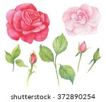rose watercolor illustration | Shutterstock . vector #372890254