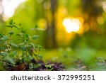 sprout in the spring forest.... | Shutterstock . vector #372995251
