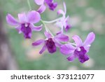 orchid purple flower bokeh... | Shutterstock . vector #373121077