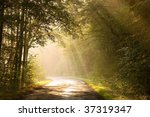 country road through the misty... | Shutterstock . vector #37319347