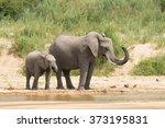 two african elephants drinking...   Shutterstock . vector #373195831