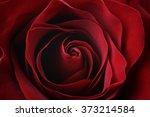 Stock photo dark red rose close up shot 373214584