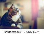 Stock photo domestic cat in home interior 373391674