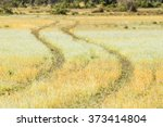 wheel track through wold flower ... | Shutterstock . vector #373414804