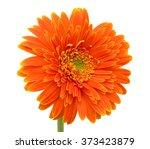 Stock photo beautiful orange gerbera flower isolated on white background 373423879