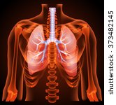 medical structure of the lungs... | Shutterstock . vector #373482145
