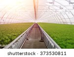 organic greenhouse. young... | Shutterstock . vector #373530811