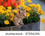 Adorable Kitten Surrounded By...