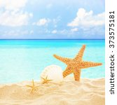starfish and shells on sandy... | Shutterstock . vector #373575181