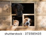 Stock photo funny company of two dogs and little kitten looking out the window of little house 373585435
