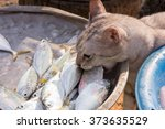 Cat Stealing A Fish From A Tra...