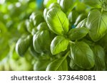 Fresh Basil Leaves Herb...