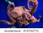 Common Octopus In Large Sea...