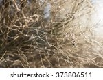 gold cold branch | Shutterstock . vector #373806511