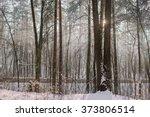 winter foggy morning | Shutterstock . vector #373806514
