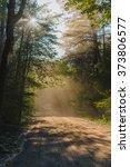 forest. sun. hot | Shutterstock . vector #373806577