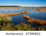 Salt Marsh At Sunset In...