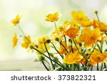 spring background close up of... | Shutterstock . vector #373822321