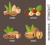 vector collection of nuts ... | Shutterstock .eps vector #373862617