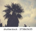 top of a palm tree at dusk  low ... | Shutterstock . vector #373865635
