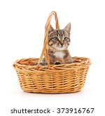 Stock photo kitten in a basket isolated on a white background 373916767