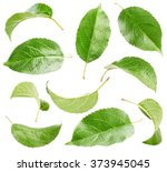 apple leaves collection... | Shutterstock . vector #373945045