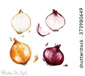 watercolor food clipart   onion  | Shutterstock . vector #373980649
