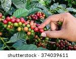 close up hand keep coffee beans ... | Shutterstock . vector #374039611