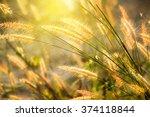 Wild Field Of Grass On Sunset ...