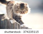Discouraged Young Cat Going On...