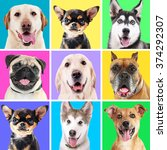 portraits of cute dogs on... | Shutterstock . vector #374292307