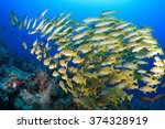 Shoal Of Colorful Fish In The...