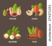 vector collection of nuts ... | Shutterstock .eps vector #374371351